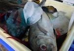 伝統の網つけ漁体験2.jpg